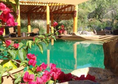 boganvia-pool